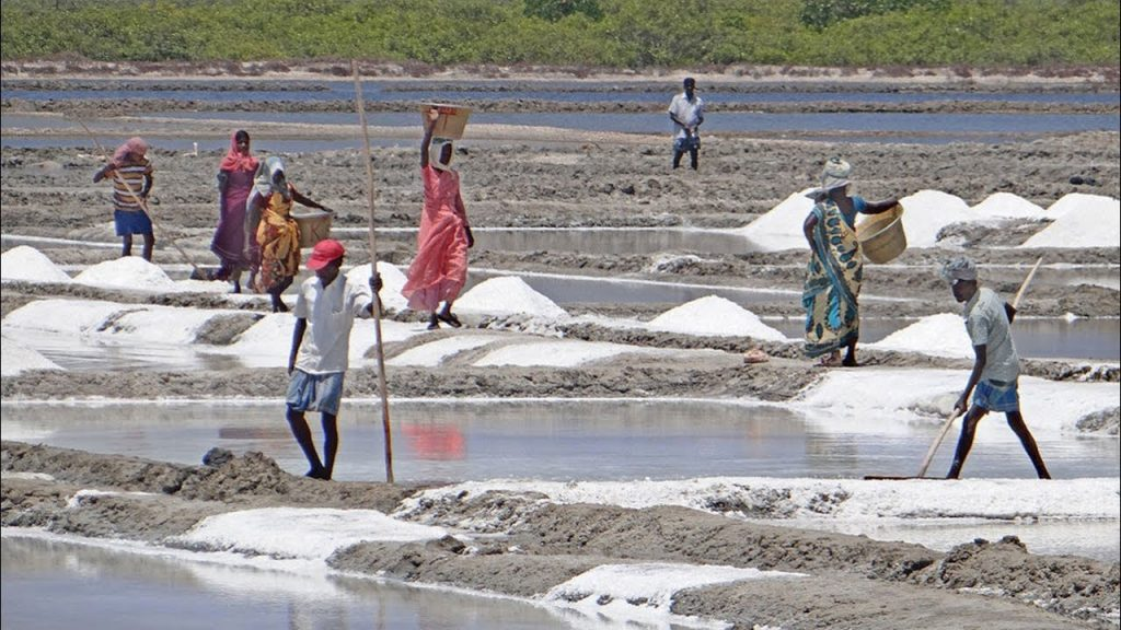 salt cultivation Maheshkhali