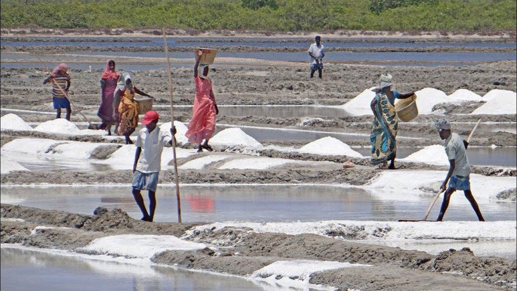 salt cultivation Maheshkhali