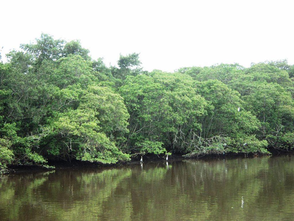 Bahia mangroves