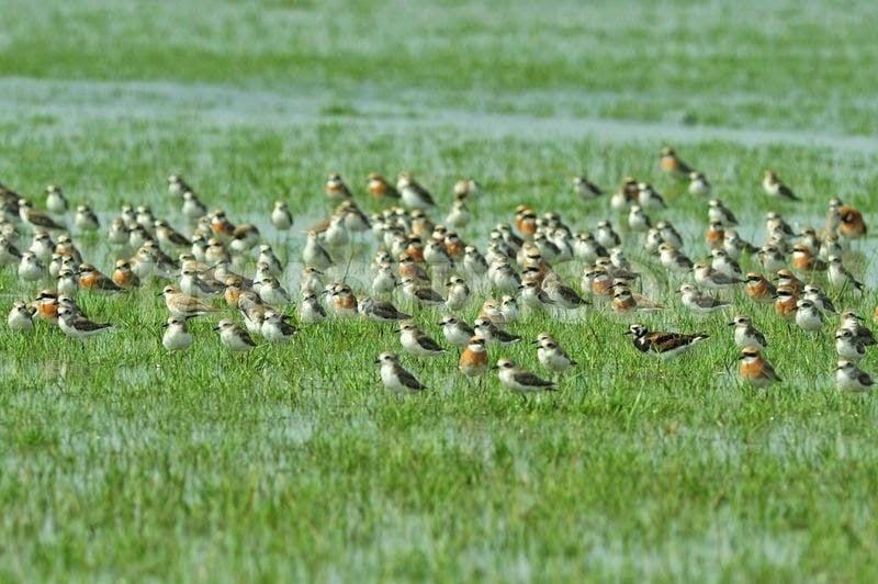 Birds on Nijhum Dwip