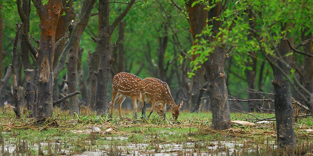 Deer Nijhum Dwip
