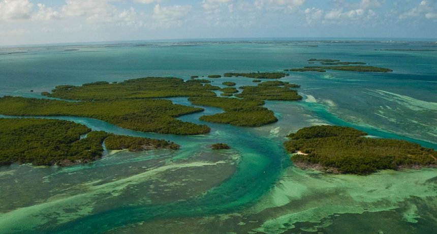 Florida's Mangrove Forest