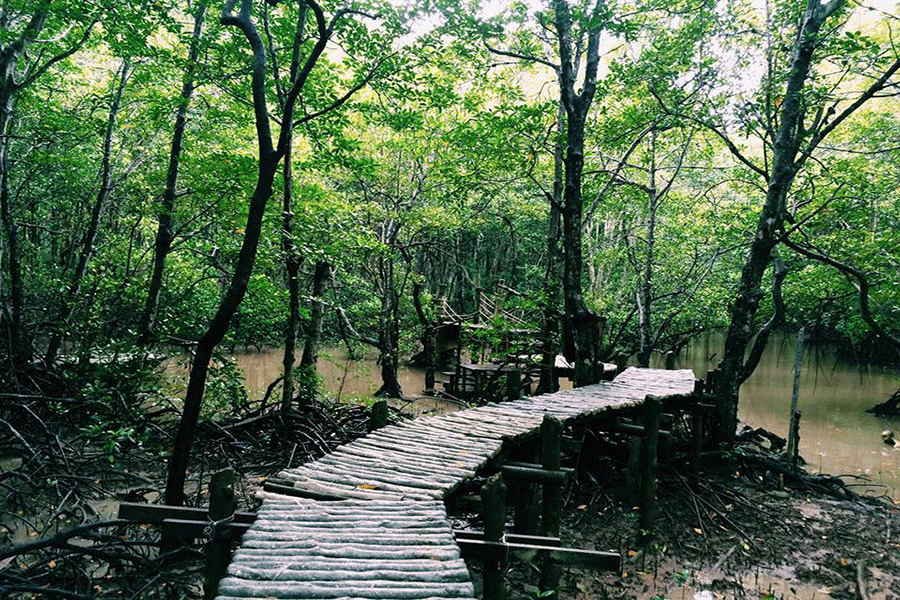 Indochina mangroves