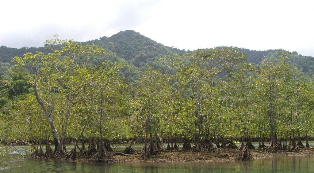 Manabi mangroves
