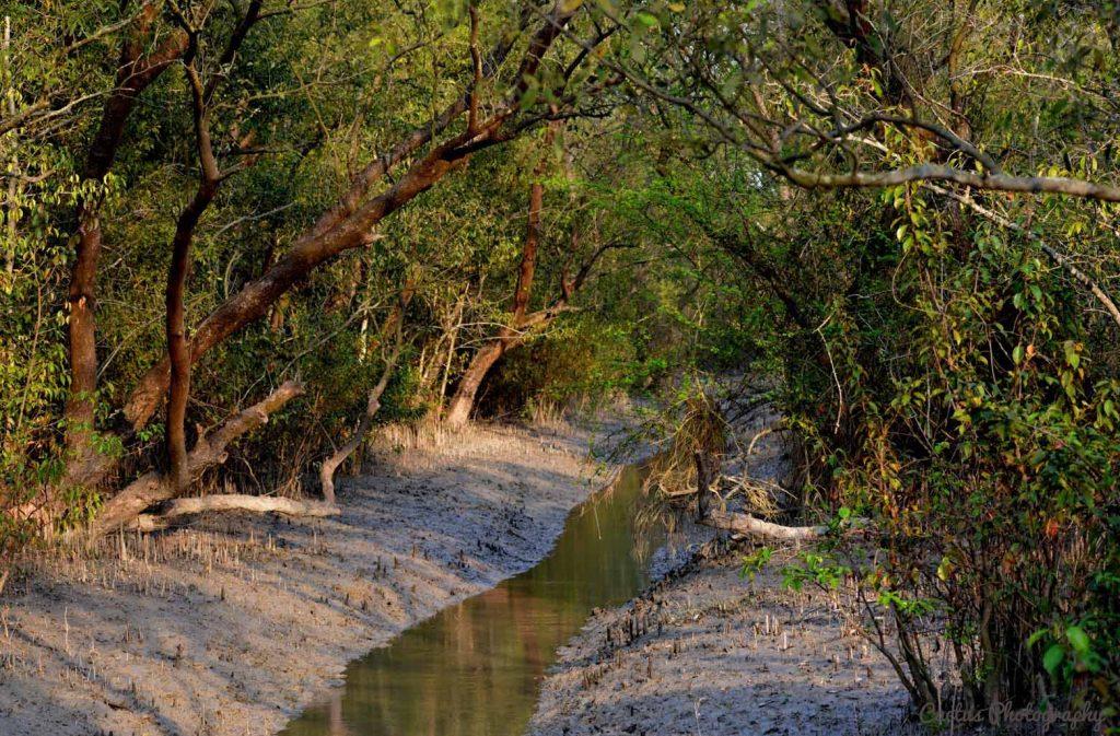 Mangrove in Nijhum Island
