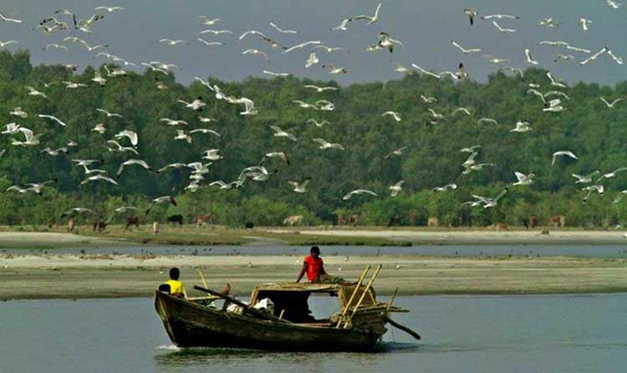 Manpura Dwip Birds