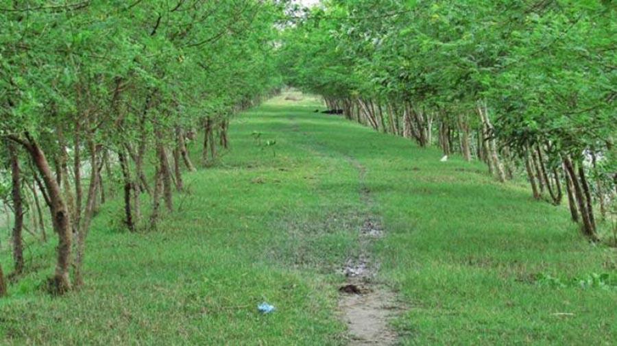 Manpura Island Mangrove