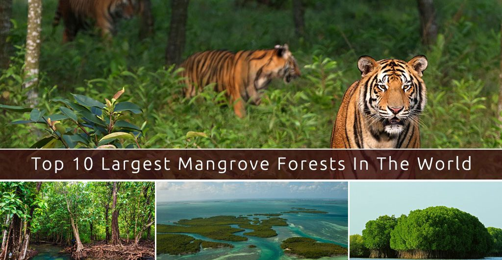 Top-Mangrove-Forests-In-the-World-List