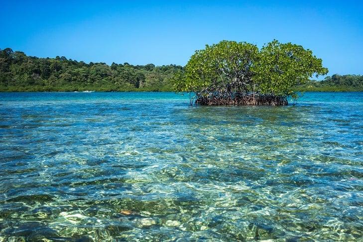Gulf of Panama mangroves