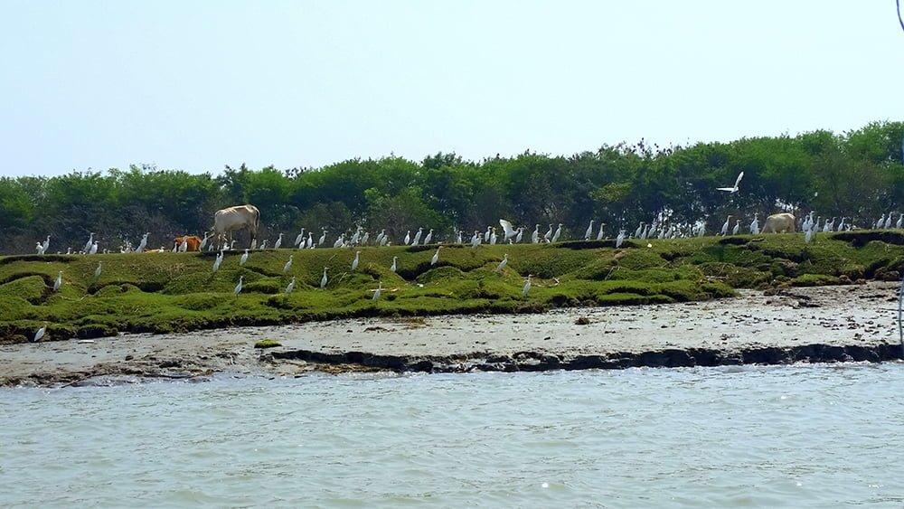 Char Kukri Mukri Island