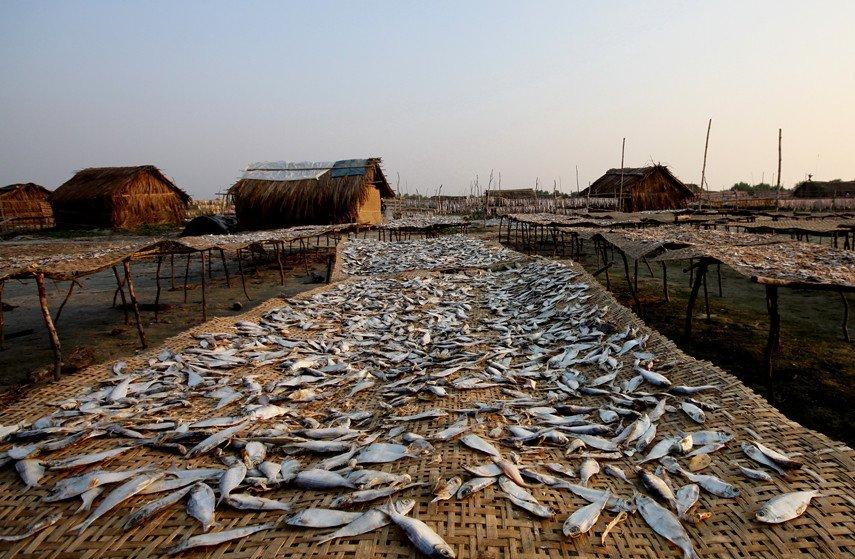Dublar Char Dry Fish 2