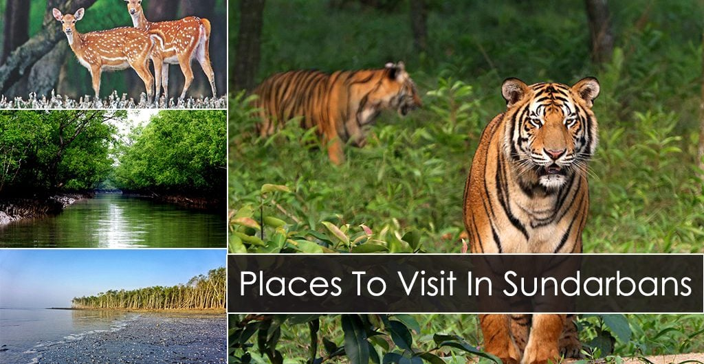 Things To Do Places To Visit In Sundarbans