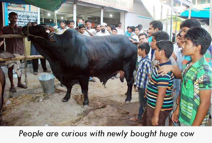 People showing curiosity with newly bought cow