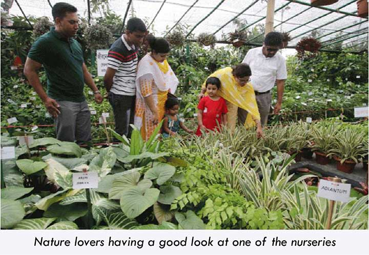 People checking out the nurseries