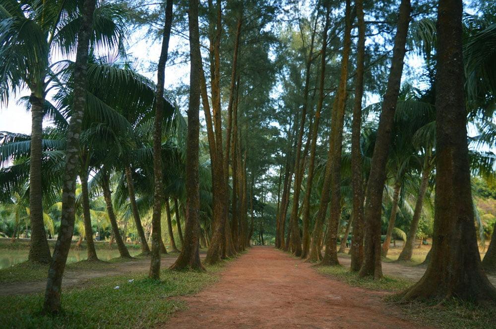 Zinda Park Trees