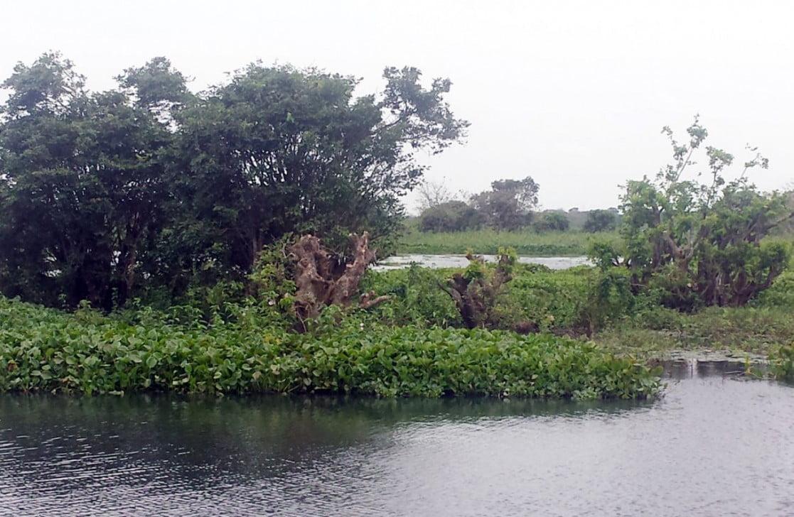 habiganj swamp Lakshmi Baor