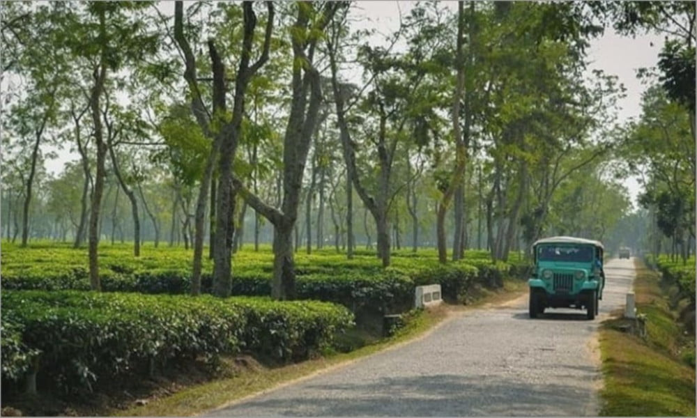 Lakkatura Tea Garden Sylhet