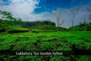 Lakkatura Tea Garden