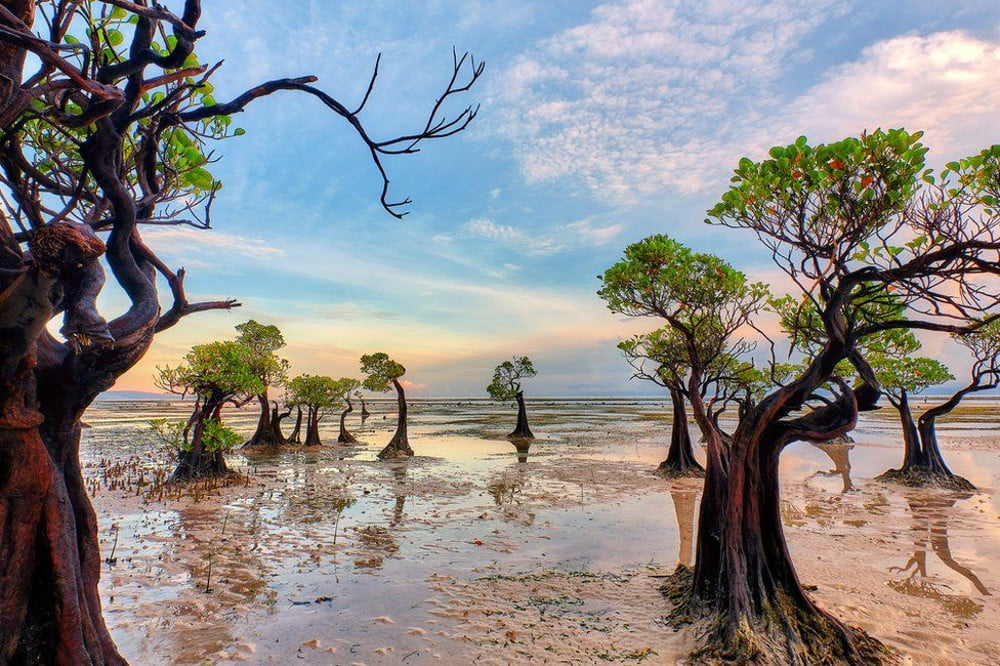 Mangrove Side Sea