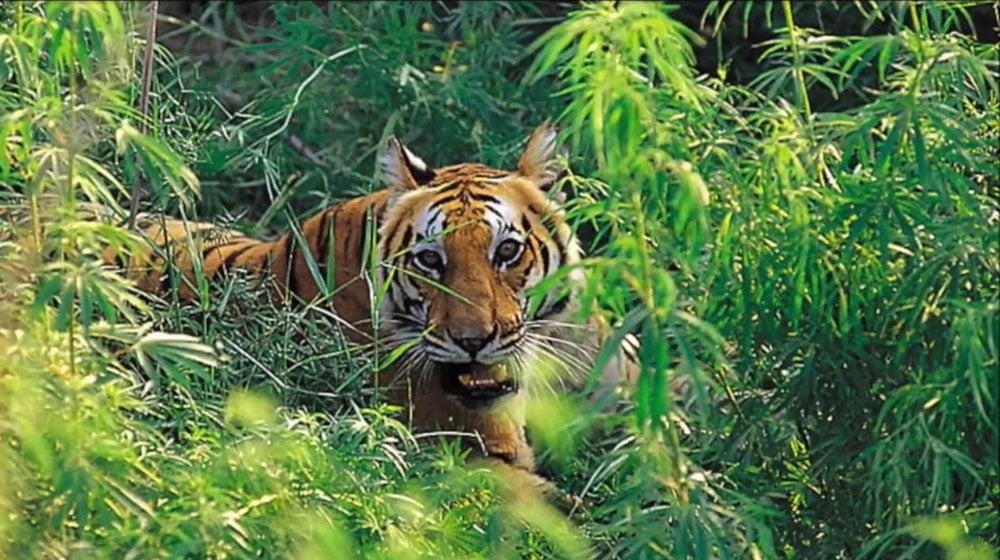 Tropical Deciduous Forest Animals