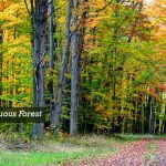Tropical Deciduous Forest In The World
