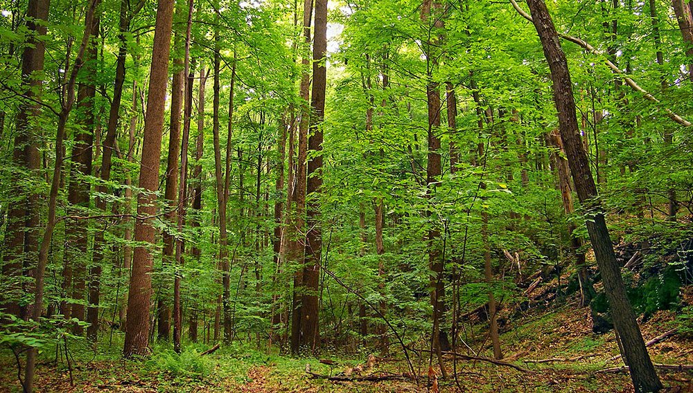 Tropical Deciduous Forest Trees